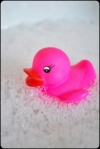 badeente pink